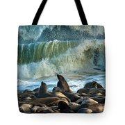 Cape Fur Seals Arctocephalus Pusillus Tote Bag