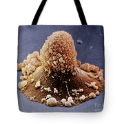 Carcinoma Cell Apoptosis Tote Bag