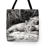 Cat And Lavender  Tote Bag