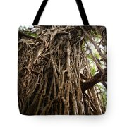 Cathedral Fig Tree Tote Bag