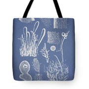 Ceratodictyon Spongiosum Zanard Tote Bag by Aged Pixel