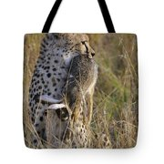 Cheetah Carrying Its Prey Tote Bag