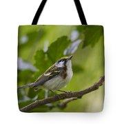 Chesnutsided Warbler Tote Bag