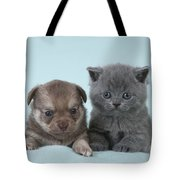 Chihuahua Puppy And British Shorthair Tote Bag
