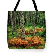 Cinnamon Ferns And Red Spruce Trees Tote Bag