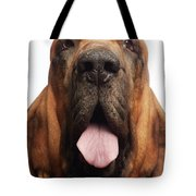 Close Up Portrait Of A Bloodhound Tote Bag