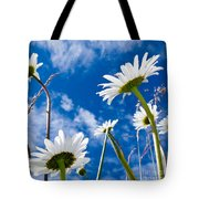 Close-up Shot Of White Daisy Flowers From Below Tote Bag