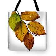 Colorful Leaves Isolated On A White Background Tote Bag