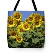 Common Sunflower Flowers Japan Tote Bag