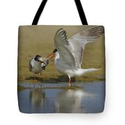 Common Tern Sterna Hirundo Tote Bag by Eyal Bartov