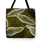 Conceptual Image Of Euglena Tote Bag