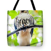 Coopers Hawk Perched On Tree Watching For Small Prey Tote Bag