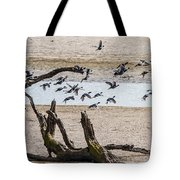 Coots-mud Hens Tote Bag
