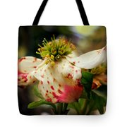 Cranberry Dogwoods Tote Bag