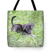 Cute Puppy In The Grass Tote Bag by Jannis Werner