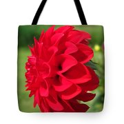 Dahlia Named Ali Oop Tote Bag