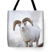 Dall Sheep Ram On Sheep Mountain Photograph By Milo Burcham