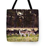 Deer In The Phoenix Park - Dublin Tote Bag by Barry O Carroll