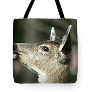 Deer Sunshine Profile Tote Bag