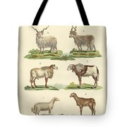 Different Kinds Of Sheep Tote Bag