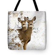 Doe Mule Deer In Snow Tote Bag