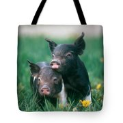 Domestic Piglets Tote Bag
