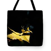 Early Fall Of  Downy Birch Tote Bag