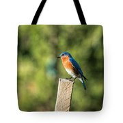 Eastern Bluebird Tote Bag