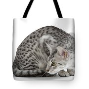 Egyptian Mau Cat Tote Bag
