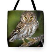 Elf Owl Tote Bag