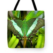 Emerald Swallowtail Butterfly Tote Bag