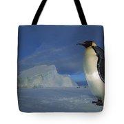 Emperor Penguins At Midnight Antarctica Tote Bag