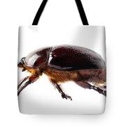European Rhinoceros Beetle Female  Tote Bag