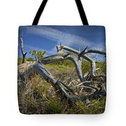 Fallen Dead Torrey Pine Trunk At Torrey Pines State Natural Reserve Tote Bag