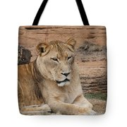 Female African Lion Tote Bag