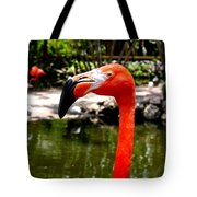 Florida Pink Flamingo Tote Bag