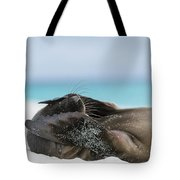 Galapagos Sea Lion Pup Covering Face Tote Bag