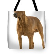 German Or Standard Pinscher Tote Bag