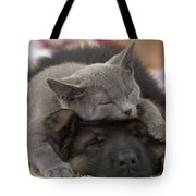 German Shepherd And Chartreux Kitten Tote Bag