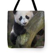 Giant Panda Cub In Tree Tote Bag