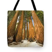 Giant Sequoias Sequoia N P Tote Bag by Yva Momatiuk John Eastcott