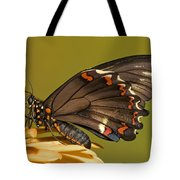 Gold Rim Swallowtail Butterfly Tote Bag