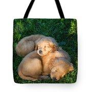 Golden Retriever Puppies Sleeping Tote Bag by Linda Freshwaters Arndt