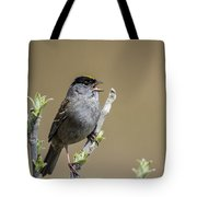 Goldencrowned Sparrow Tote Bag