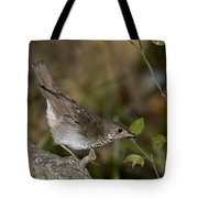Gray-cheeked Thrush Tote Bag