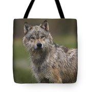 Gray Wolf  North America Tote Bag