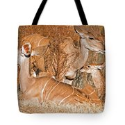 Greater Kudu Mother And Baby Tote Bag