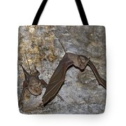 Greater Mouse-tailed Bat Rhinopoma Microphyllum Tote Bag
