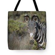 Grevys Zebra Stallion Tote Bag