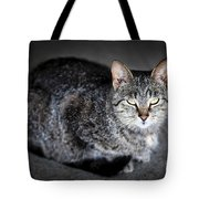 Grey Cat Portrait Tote Bag